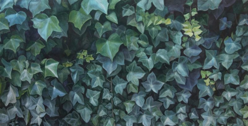 10.Ivy _ 200X103cm _ oil on linen _ 2013